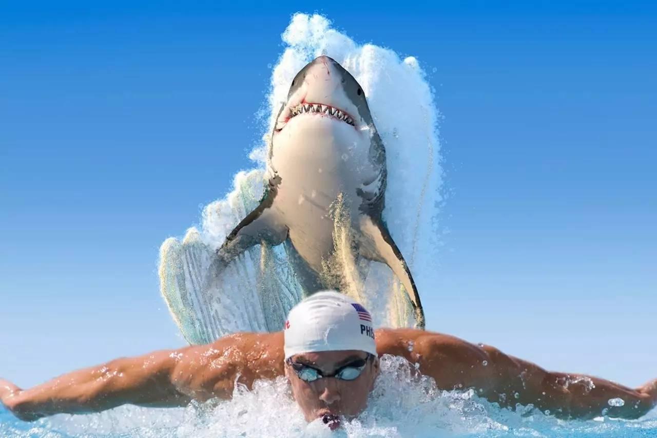 这也能叫 飞鱼 战白鲨 菲尔普斯还是没能突破人兽PK的想象