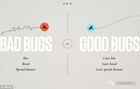 他们拟放出2000万只不孕新疆妇科不育的蚊子 让其他蚊子绝
