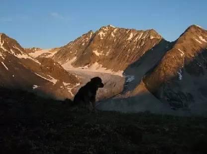因为16年前的知遇之恩 这只老狗选择用生命作为回报