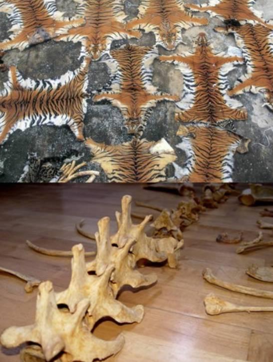 老虎折纸步骤图解大全