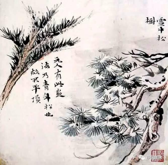 此松干甚粗壮,而松针细挺,以见轻重. 雪中松树.