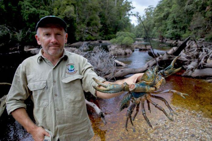 稀有巨型淡水龙虾变异成彩色,动物保护者众筹保护龙虾