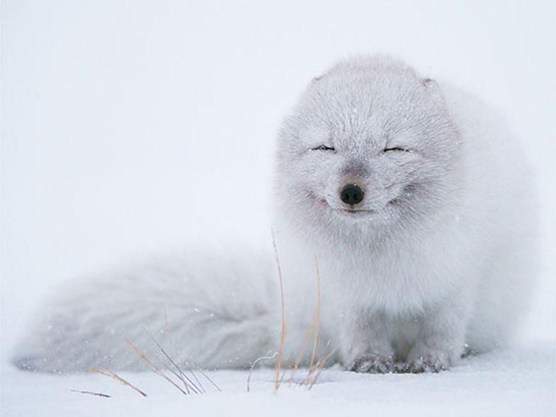 一组动物的微笑,满满的治愈力!