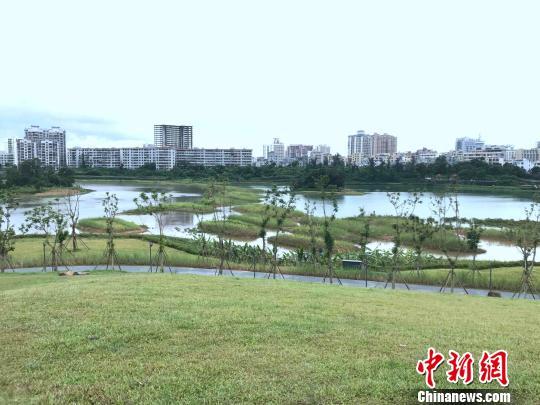 海口利用凤翔湿地公园内的水域滞蓄雨洪,有效缓解了下游防汛压力。 王子谦 摄