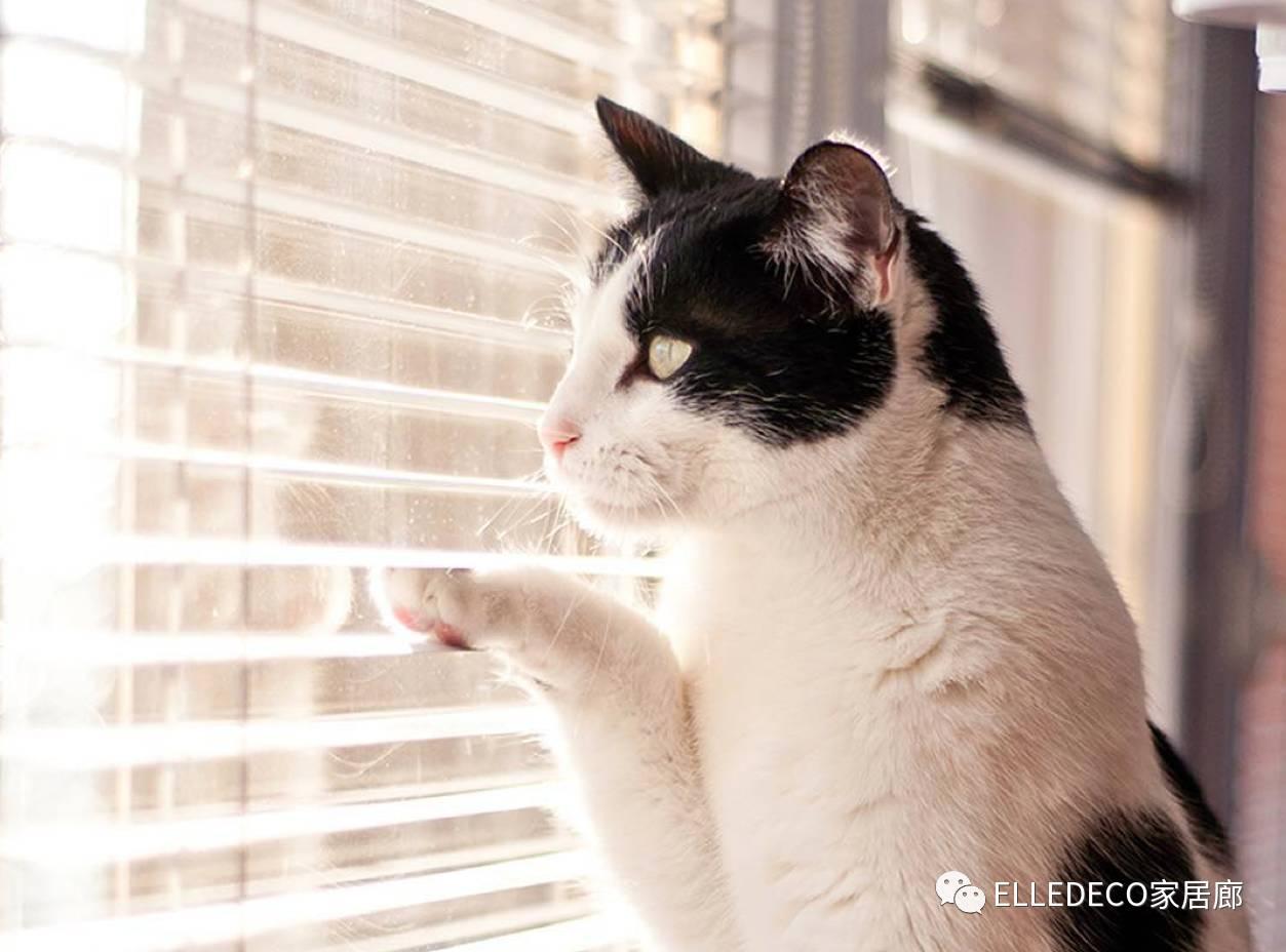 壁纸 动物 狗 狗狗 猫 猫咪 小猫 桌面 1253_928