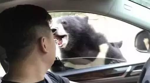 评论丨野生动物园再次发生猛兽伤人事件:游客不能心存