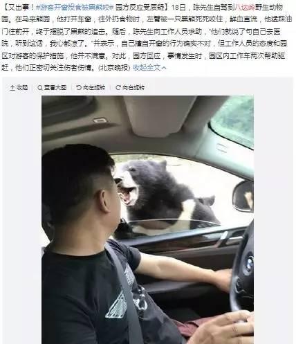 """""""熊咬人""""事件视频公布:巡逻人员赶走熊后,游客继续开窗投食"""