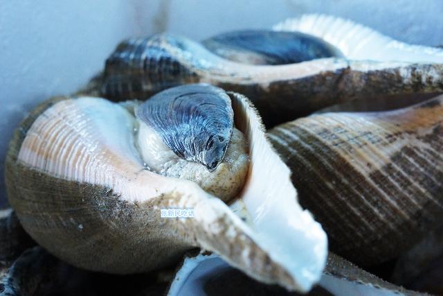 食材响螺为何被视为潮州菜独有的菜肴?响螺有哪些经典吃法?