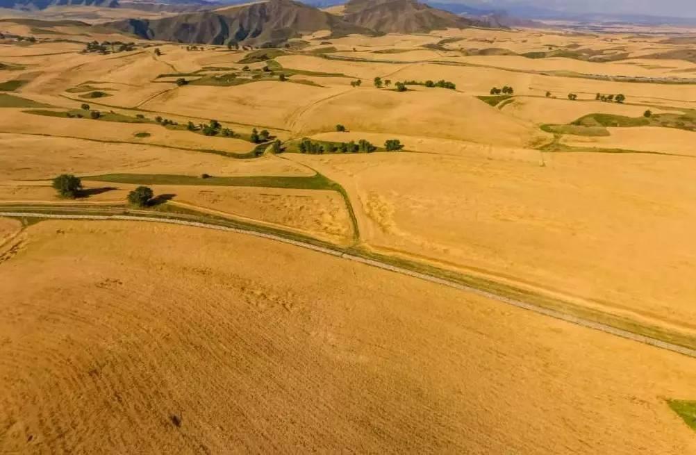 壁纸 成片种植 风景 沙漠 植物 种植基地 桌面 1002_655