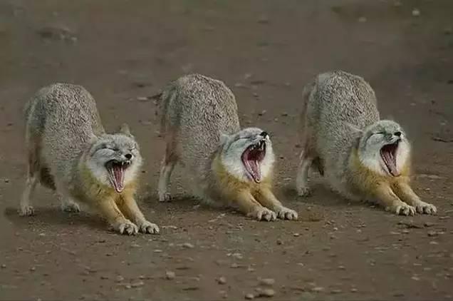 奇趣的动物世界