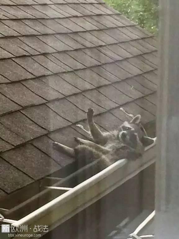 为什么别人家隔壁住着金城武,而我的邻居是个神经