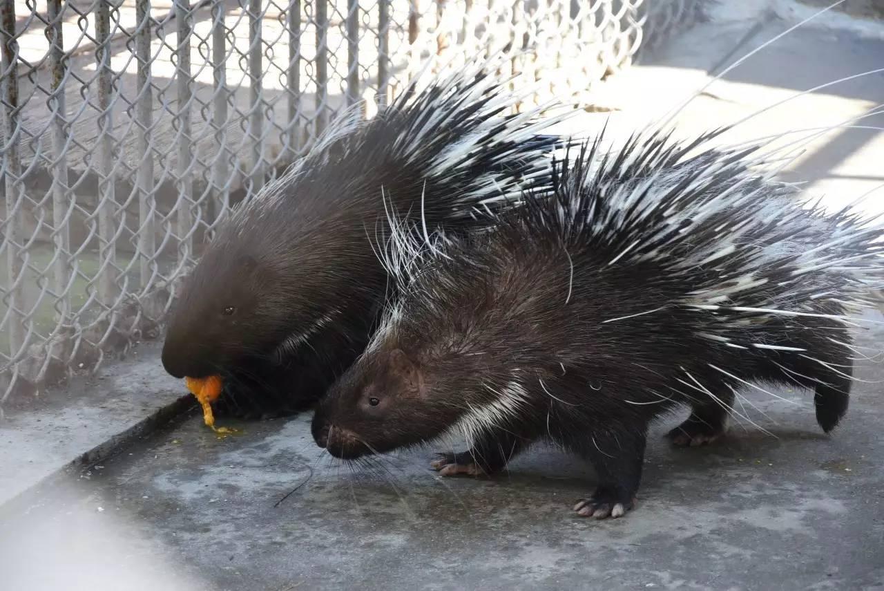动物爱情宣言——北方森林动物园动物情侣花样秀恩爱图片