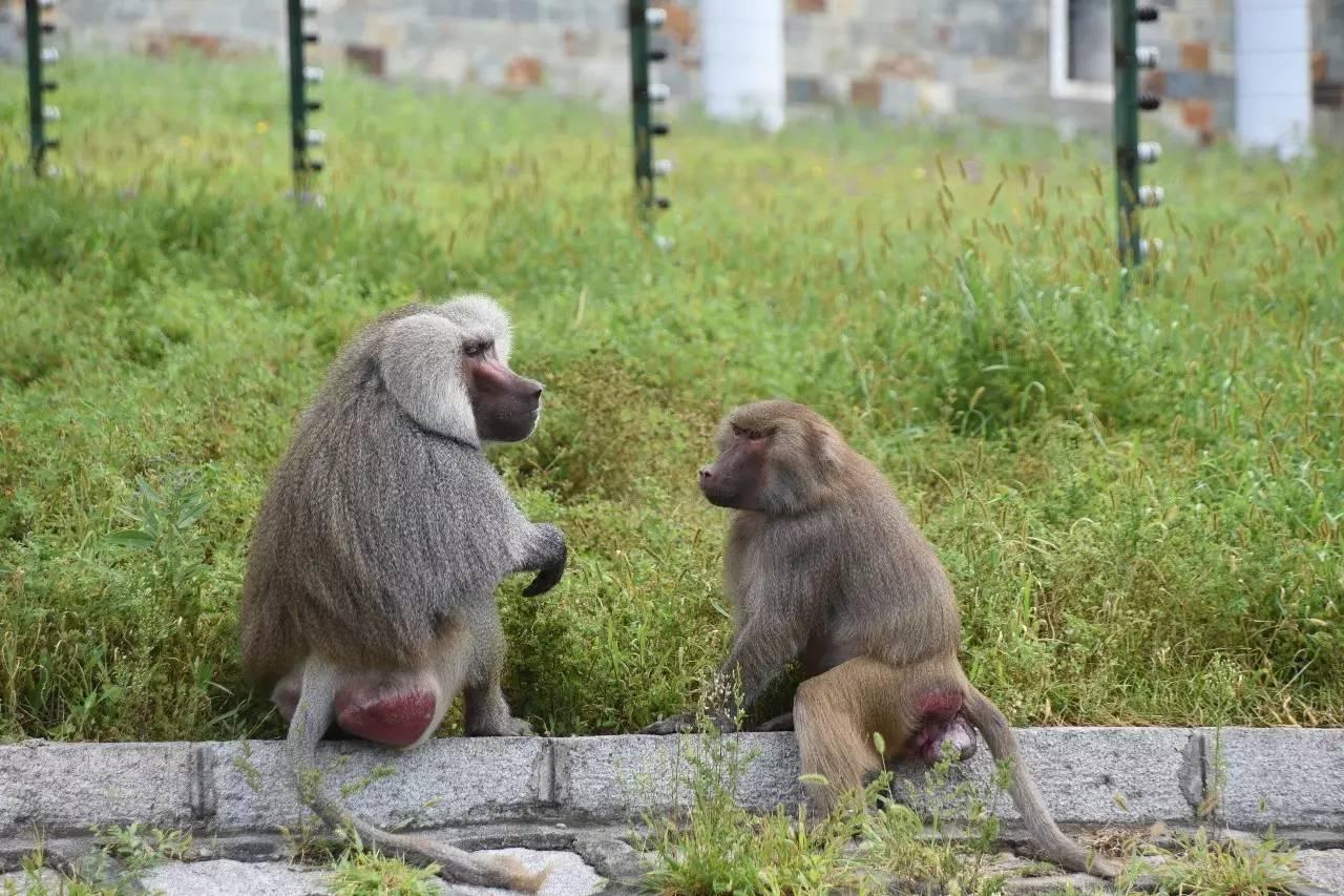 动物爱情宣言——北方森林动物园动物情侣花样秀恩爱