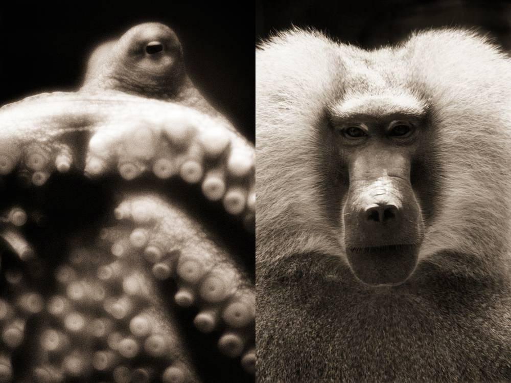 但是唯有人类才能在动物的眼神中体会到这种熟悉感.