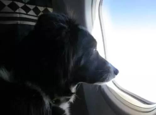 飞机安全座位图