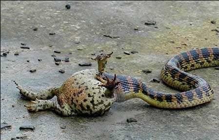 蛇最可怕的地方 不在于它那柔软卷曲的外表, 更在于它可能会对你造成