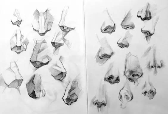 要理解鼻子转动时的透视结构 ↓ ↓ ↓ 耳朵  画速写的时候很多人没有