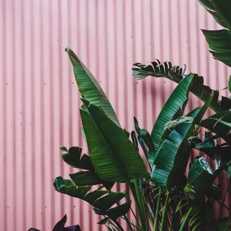 ins植物素材