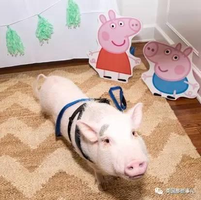 这个粉红色的小胖子叫abby, 圆滚滚的十分可爱… 这只也叫pickle, 个