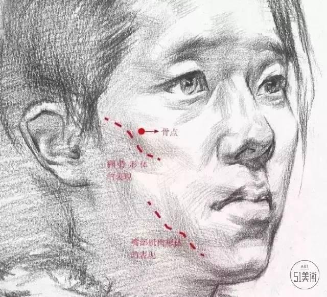 【素描】头像面部结构与头发头部的形体特征,还不速学