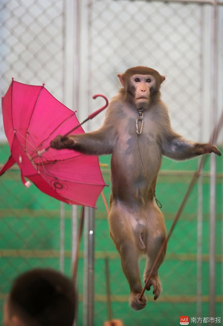 24年后,广州动物园马戏谢幕