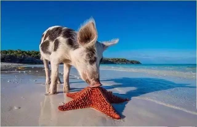 看世界丨看完这些被动物统治的小岛,好想放弃做人类