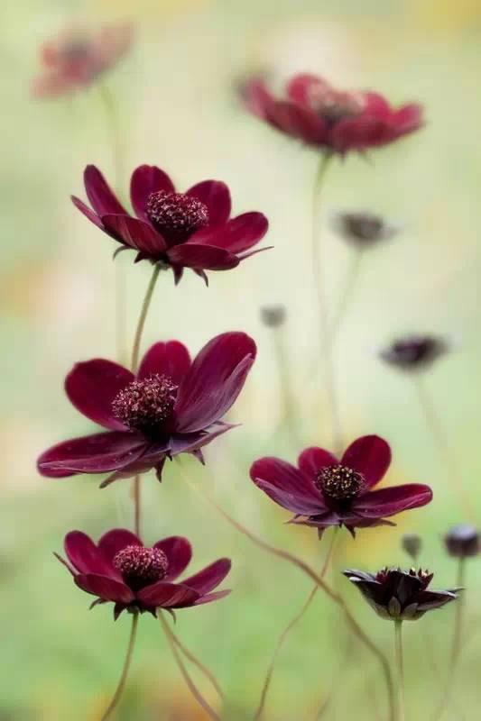 出去玩遇到漂亮的花儿,怎么拍才漂亮?