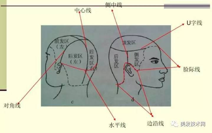 头型的线 及分区分份理论