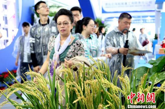 观众参观海水稻展区。 王培珂 摄