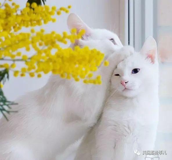 壁纸 动物 猫 猫咪 小猫 桌面 593_551