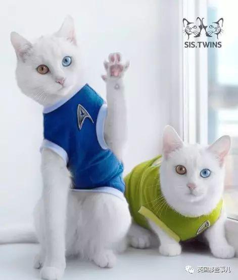 壁纸 动物 猫 猫咪 小猫 桌面 471_553
