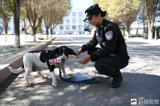 """薛静楠训练的警犬是一只史宾格排爆犬,它的名字叫""""妞""""。"""