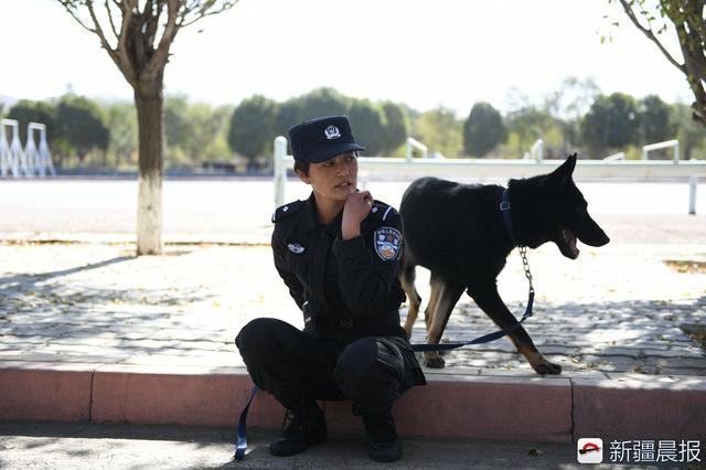 """马海霞训练的警犬是东德黑背牧羊犬,这只警犬还有个名字叫""""黑熊""""。"""