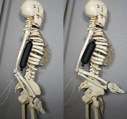 ca88会员登录,ca88亚洲城官网会员登录,ca88亚洲城,ca88亚洲城官网_人造肌肉问世 机器人将不再钢筋铁骨