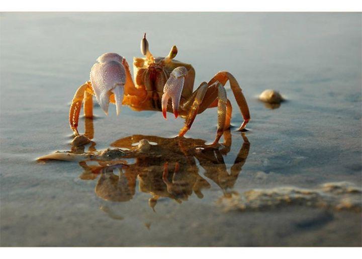 从古到今的螃蟹一直这么贵吗