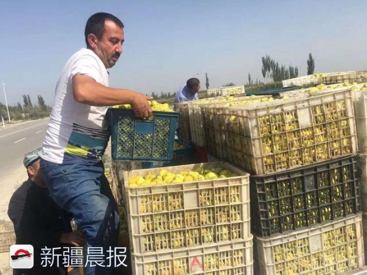 """喀什地区""""无花果村""""加工厂月底完工 销路让村"""