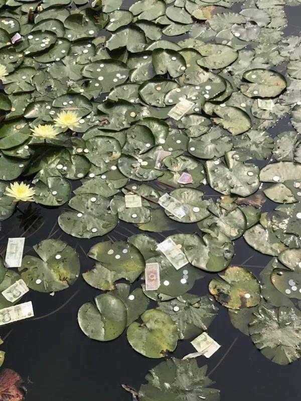 睡莲被撒满钱币