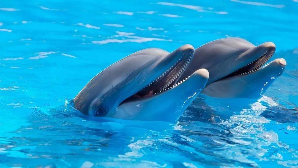 还以为海獭很萌?你是没见过它们奸杀海豹幼崽对吧