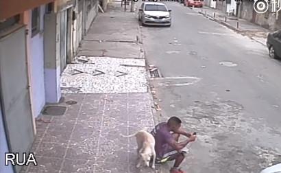 男子街边玩手机久坐不动 被狗子当消防栓如厕-新闻头条5dainban