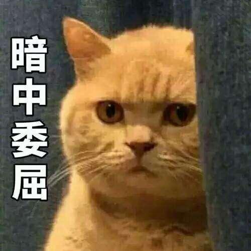 你连表情里猫的表情都不知道,还敢说爱猫?a表情中秋动态包qq名字图片