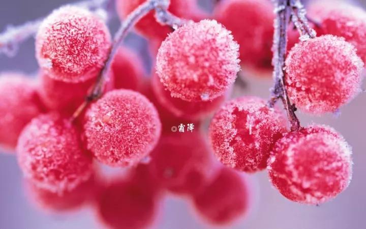 霜降-安徽门户网站