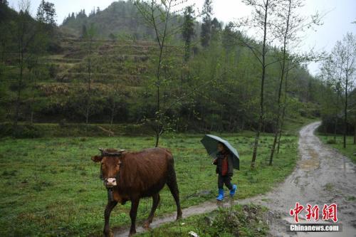 <b>重庆山里人年入逾30万绿水青山变金山银山</b>