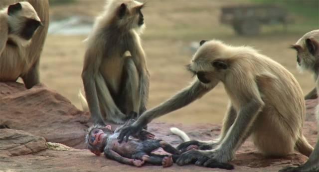 bbc又出神片:动物纷纷表示,再也不相信人类了!
