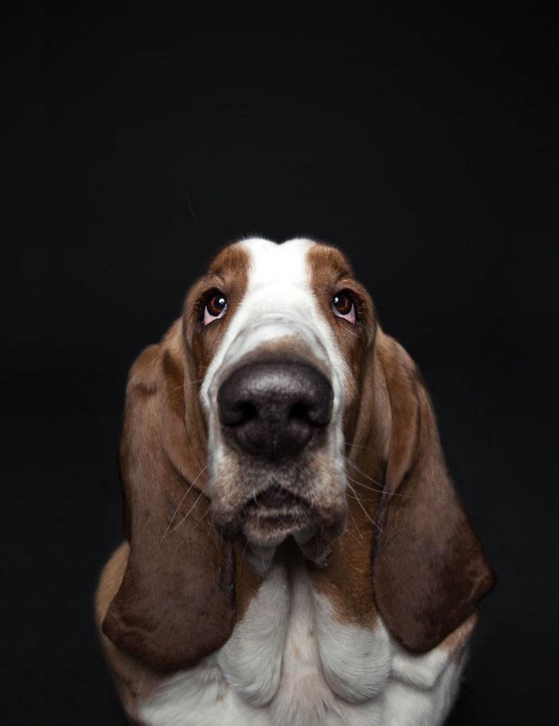 一组喜怒哀乐的狗狗表情照 和人类一样有面部表情图片