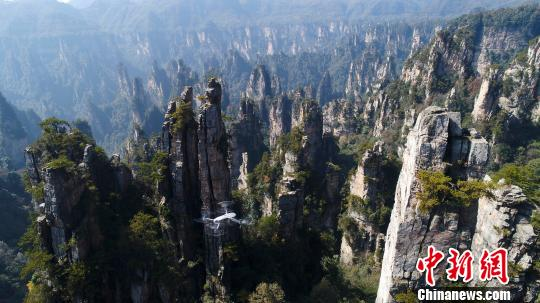 无人机正在张家界武陵源世界罕见的峰林地貌进行航拍。 张云 摄