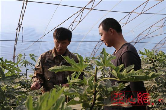 新疆兵团第十二师:发展特色设施农业 为职工增收增效