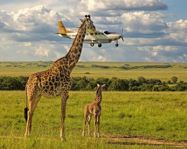 动物王国的趣味瞬间,从大象,犀牛到濒危的猩猩及鲨鱼,每种生物都有