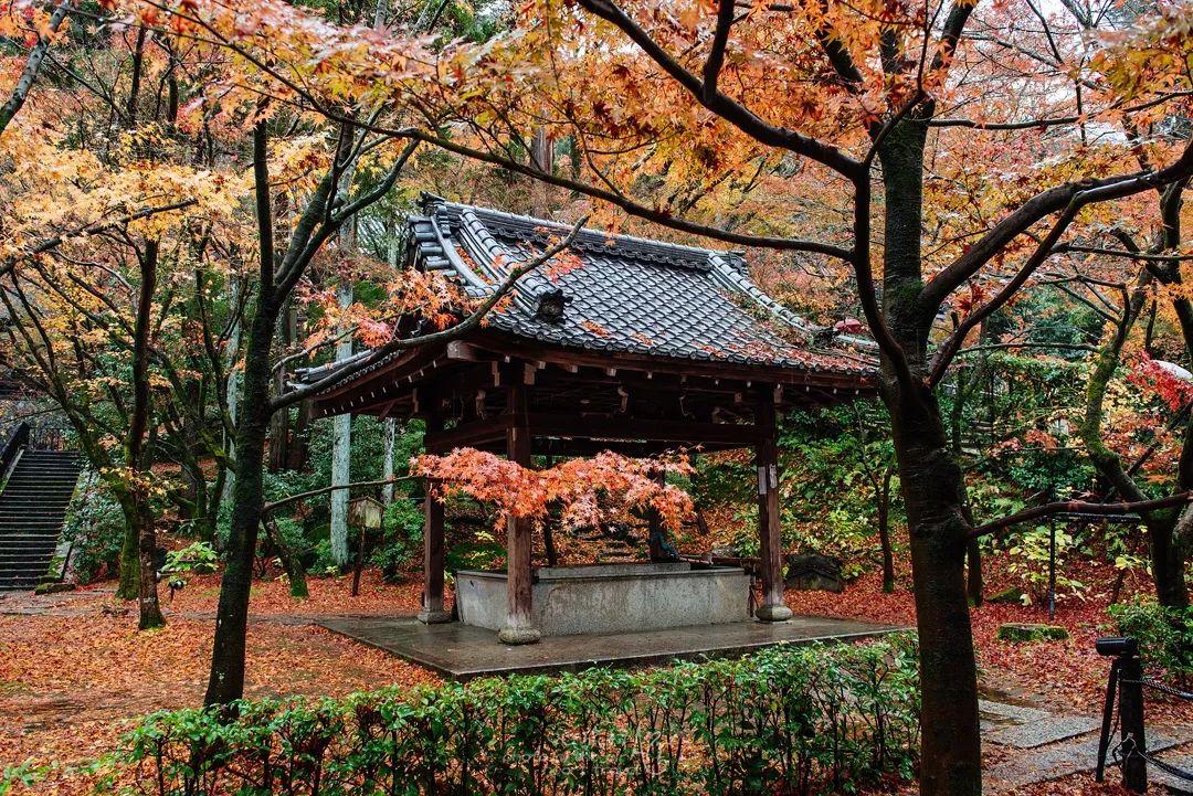 日本|红叶狩 艳遇京都图片