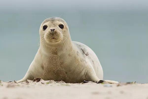 乖,怎么越看你越像个水陆两栖动物啊? 像什么?