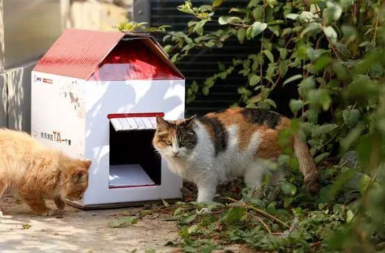 废纸分会秘书长唐艳菊认为,利用环保纸箱制作流浪猫屋也是再利用的一